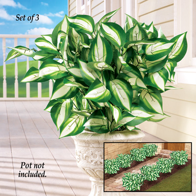 Hosta Bushes Picks - Set of 3