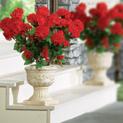 Indoor and Outdoor Red Geranium Bushel Floral Picks
