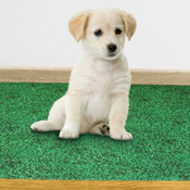 Leak Resistant Puppy Potty Pad