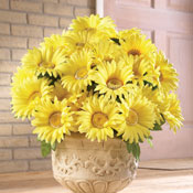Floral Gerbera Daisy Bushes - Set of 3