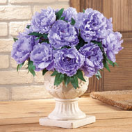Floral Peony Bushes - Set of 3 - 29840