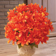 Floral Chrysanthemum Bushes -  Set of 3