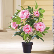 Faux Peony Bushes in Pot