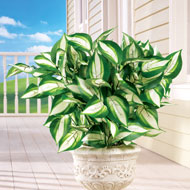 Hosta Bushes Picks - Set of 3 - 38969