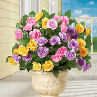 Artificial Pastel Rose Bushes Set of 3 - 42023