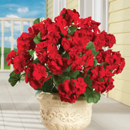 Artificial Begonia Flower Bushes, Set of 3 - 42025