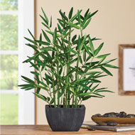 Realistic Faux Bamboo Plant with Ceramic Pot - 46582