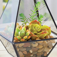 Succulent Plants with Rocks - Set of 11 - 46850