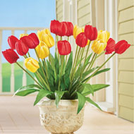 Red & Yellow Tulip Bushes - Set of 3 - 46988