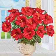 Hibiscus Bushes - Set of 3 - 47496
