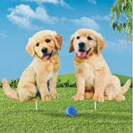 Golden Retriever Puppies Yard Stakes - Set of 2 - 47522