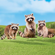 Realistic Raccoon Metal Yard Stakes - Set of 3 - 47627